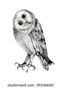 Pencil Illustration of a Cute Owl with it's Head Tilted