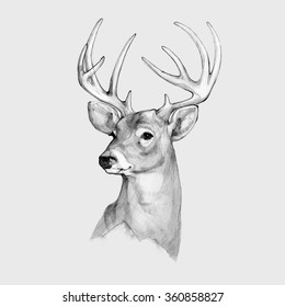 Pencil illustration, hand graphic - a deer head