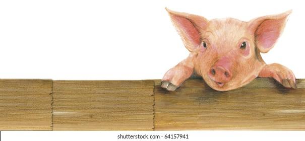 pencil illustration of a piglet