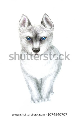 Royalty Free Stock Illustration Of Pencil Sketch Angry Siberian