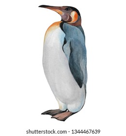 Penguin isolated on white background. Watercolor hand drawn illustration. One penguin.