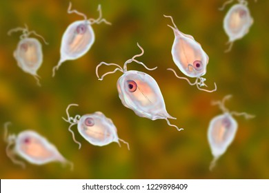 Pentatrichomonas hominis protozoan, 3D illustration. Also known as Trichomonas hominis or T. intestinalis, colonizes human large intestine, usually asymptomatic but may cause diarrhea