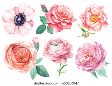Peonies, anemones, ranunculus, roses. Watercolor Flower set, botanical illustration.