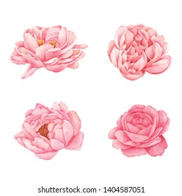 Peony Flower Collection Hand painted in watercolor
