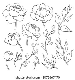 Peony flower and leaves line drawing. hand drawn outline floral set. Simple botanical peonies, branch and berry countur. Black ink sketch. Great for tattoo, invitations, greeting cards, decor