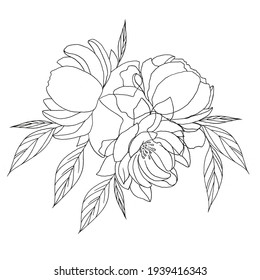 Peony flowers drawing and sketch with line-art on white backgrounds.
