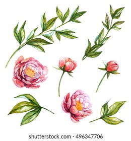 Peony. Watercolor floral set with peony flowers, buds, leaves and branches. Hand painted illustration with isolated flowers and leaves for floral design