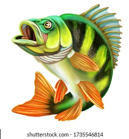 Perch Fish Illustration. Isolated on white background.