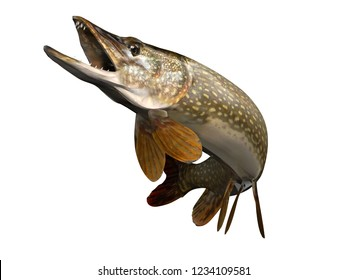 Perfect pose for common pike fish up in air clean 3d render
