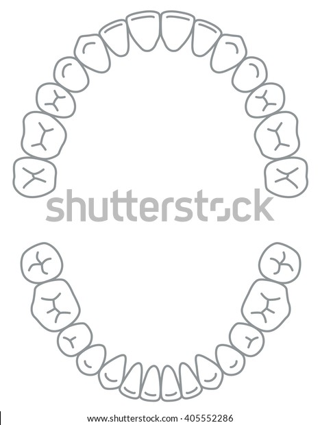 schematic of teeth