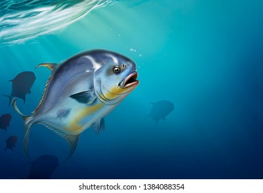 Permit fish on white Trachinotus blochii. Permit fish on underwater realistic illustration background.