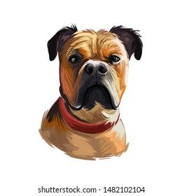 Perro de Presa Mallorquin dog portrait isolated. Digital t-shirt print and puppy cover design, clipart. Mallorquin Mastiff, Perro Dogo, Presa Canario Mallorquin, Majorcan Mastiff, Majorcan Bulldog