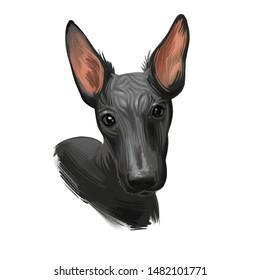 Peruvian Hairless dog portrait isolated. Digital for web, t-shirt print and puppy food cover design, clipart. Perro Sin Pelo de Peru, Inca Dog, Viringo, Peruvian Inca Orchid, Calato, Dielmatian
