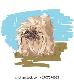 Pet illustration. Pekingese runs along the summer grass. Fluffy dog. Hair care.
