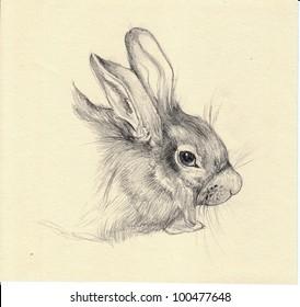 Pet rabbit sketch