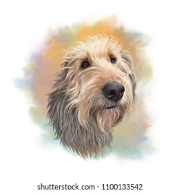 Petit Basset Griffon Vendeen dog. Cute head of a domestic dog for print on pillow, T-shirt, card. Hand Drawing in realistic style. Graphic portrait. Watercolor Animal collection: Dogs. Art background