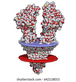 P-glycoprotein 1 (P-gp) multidrug transporter protein. Efflux pump that pumps many drugs out of cells. Involved in multidrug resistance of cancers. 3D rendering.