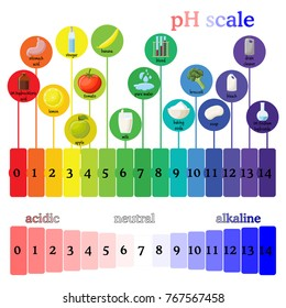 pH scale diagram with corresponding acidic or alcaline values for common substances, food, household chemicals. Litmus paper color chart. Colorful flat style illustration isolated on white background.