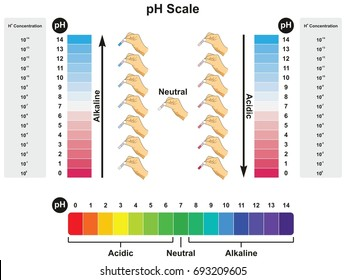 pH Scale infographic diagram showing values and concentrations with experiment example result in acidic neutral or alkaline for science education