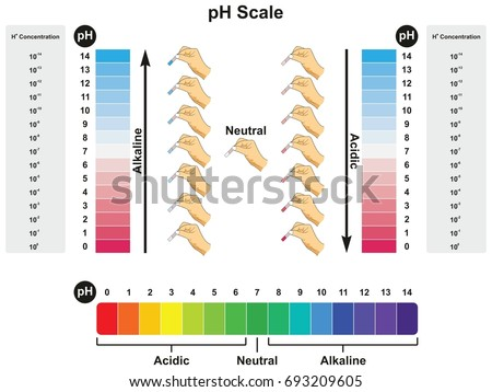 p h scale infographic diagram showing values stock illustration Acid Dissociation Constant ph scale infographic diagram showing values and concentrations with experiment example result in acidic neutral or