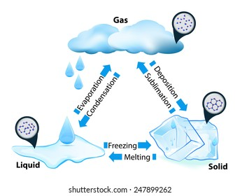 phase or state of matter. phase transition. This diagram shows the different phase transitions for example water