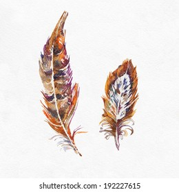 Pheasant feathers on white background. Watercolor picture.