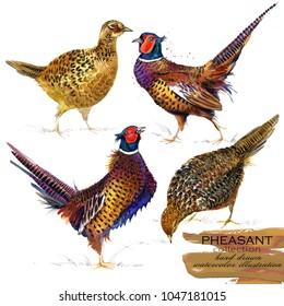pheasant hand drawn watercolor illustration set