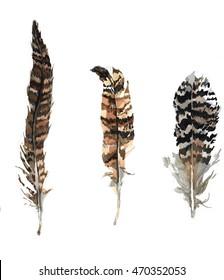 pheasants feathers illustration