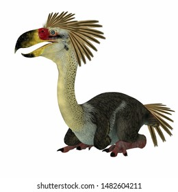 Phorusrhacos Bird Sitting 3d illustration - Phorusrhacos was a flightless carnivorous terror bird of prey that lived in Patagonia during the Miocene Period.