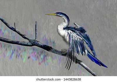 A photographic image of a large waterbird, a Darter, perched on a tree branch,  which has been digitally enhanced to produce an artistic picture with a grey background
