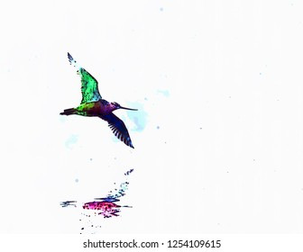 Pictorial drawing of godwit (Limosa) flying over the water, rainbow reflections, animalier art, bitmap
