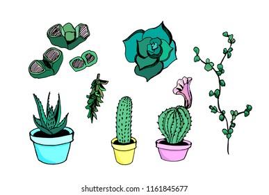 Picture with aeonium, aloe, crassula, lithops, cactus.
