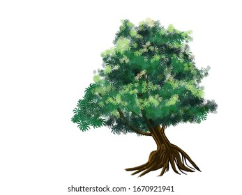 The picture of a big tree with many roots and is stable.Big tree Sprawling , The trunk is curvy, natural curves Isolated on white background