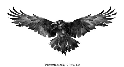 picture of the bird the Raven in front on a white background