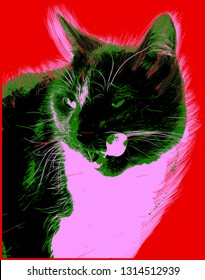 Picture with cat over red background in pop art style