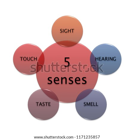 Picture Diagram 5 Senses Manufacturing Business Stock Illustration
