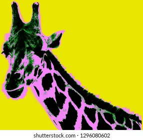 Picture with giraffe over yellow background in pop art style