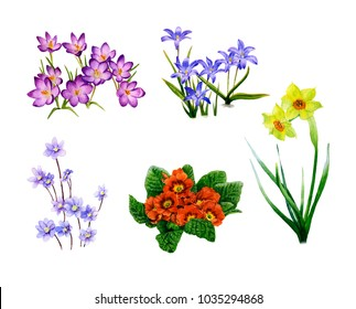 Picture-set of blossomy spring flowers (crocuses, bluebells, hepaticas, primulas, narcissi) hand painted in watercolor isolated on the white background. The symbol of spring and nature's awakening