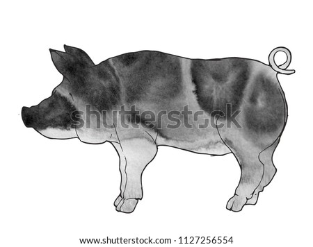 Pig Boar Japanese Chinese Painting Watercolor Stock Illustration