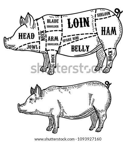 pig butcher diagram pork cuts 450w 1093927160 royalty free stock illustration of pig butcher diagram pork cuts