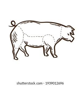 Pig farm animal livestock. Hand drawn sketch in a graphic style. Vintage engraving illustration for poster, web. Isolated on white background.