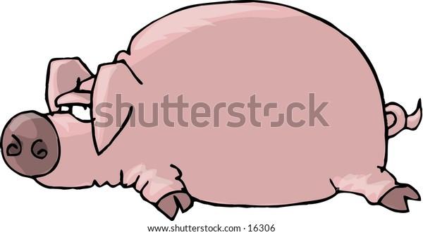 Pig laying flat