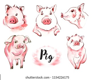 Pig watercolor illustration set of hand-painted. Symbol of New Year 2019. 5 portrait of farm animals facet and profile. Drawn sketch isolated on white background.
