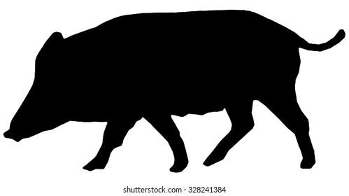 pig or wild boar