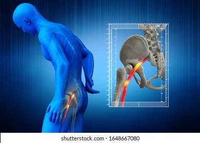 人間の坐骨神経、解剖学的な視覚をつねった。3Dイラスト。