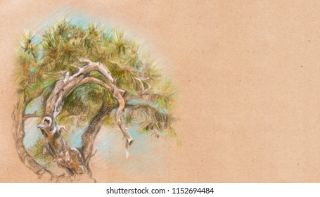 Pine tree banner, card template. Color pencil drawing on craft paper