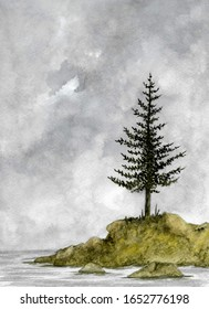 Pine Tree Under Cloudy Skies
