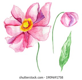 Pink anemones watercolor set. Template for decorating designs and illustrations.