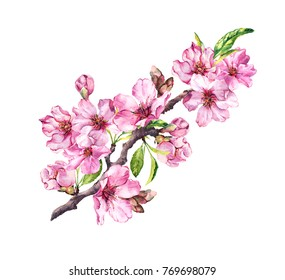 Pink apple flowers, sakura, almond flowers. Watercolor flowering branch