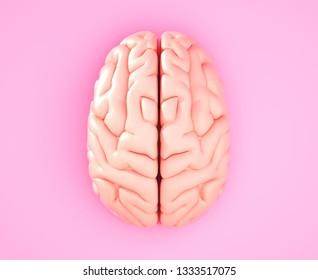 Pink brain on the color background. 3D illustration